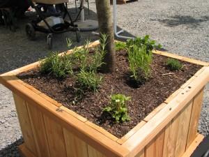 201105EroeffnungObsthainKraeuterunterpflanzung