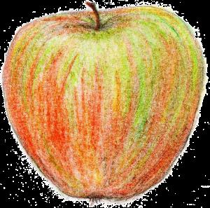 Apfel_trans
