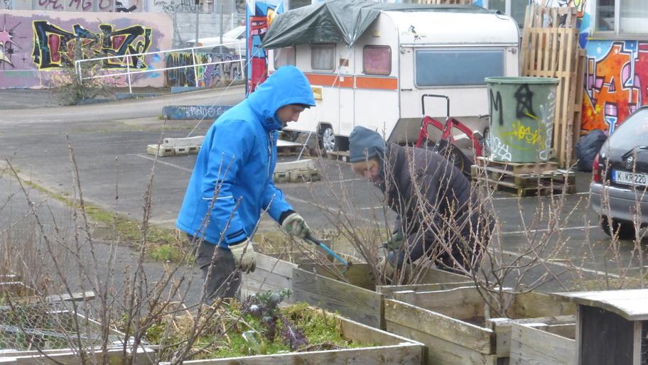 Doris und Chris jäten wegen der Kälte dick vermummt eine Beerenpflanzkiste.