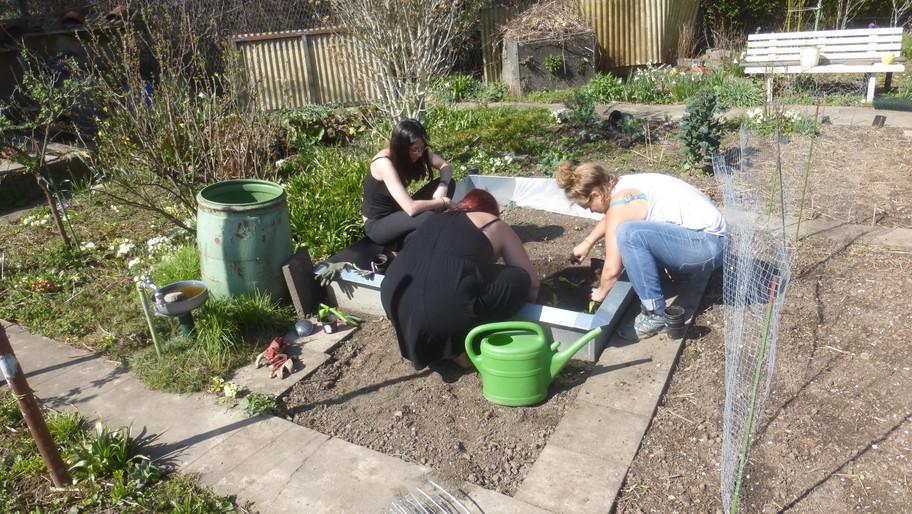 Carmen, Annette und Lara pflanzen junge Pflücksalate ins Beet B1.